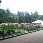 German Festival 2